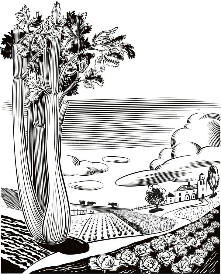 Landbouwdielandschap met selderie wordt geplant stock illustratie