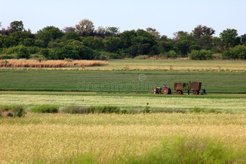 Landbouwer in Afrika stock foto