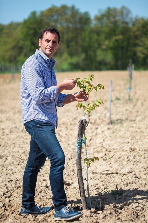 Landbouwer in de boomgaard stock foto's