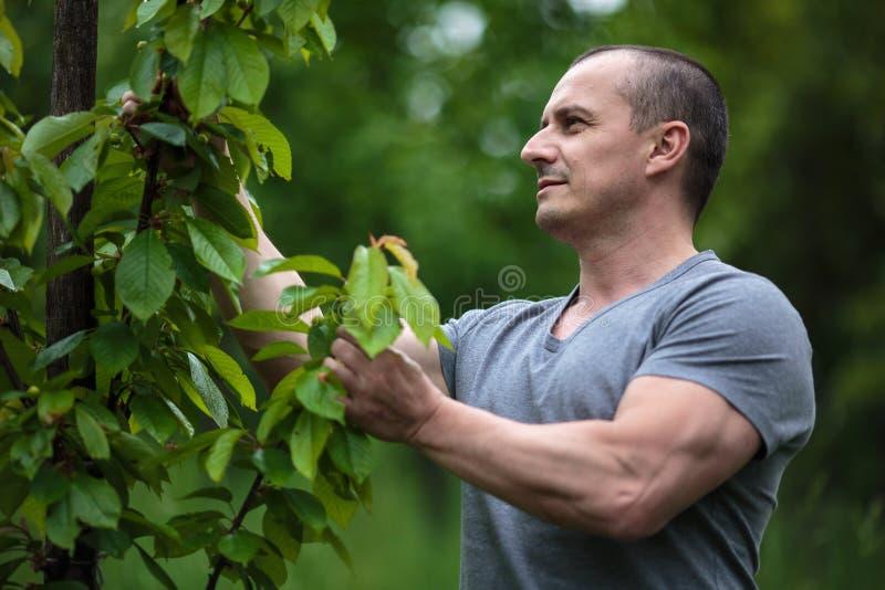 Landbouwer in de boomgaard royalty-vrije stock fotografie