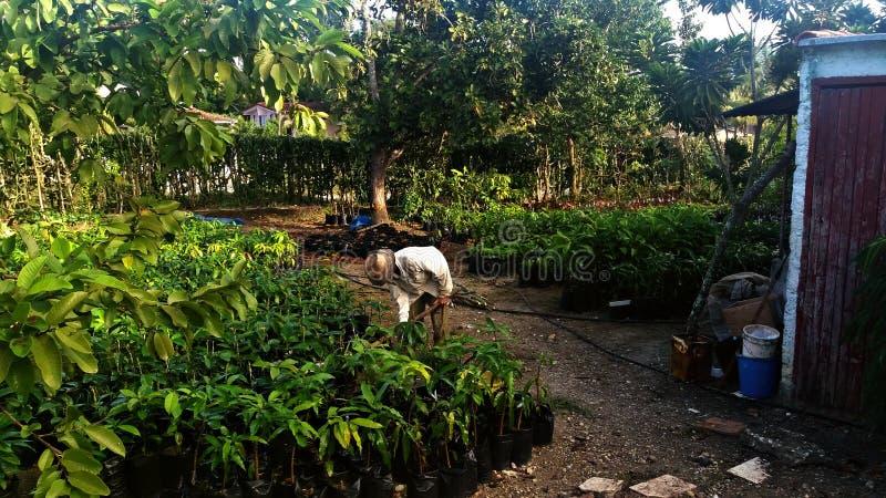 Landbouwer die de grond in een boomgaard ploegen stock foto