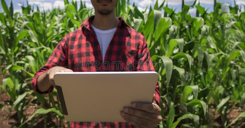 Landbouwer die digitale tabletcomputer, gecultiveerde graanaanplanting met behulp van stock afbeelding