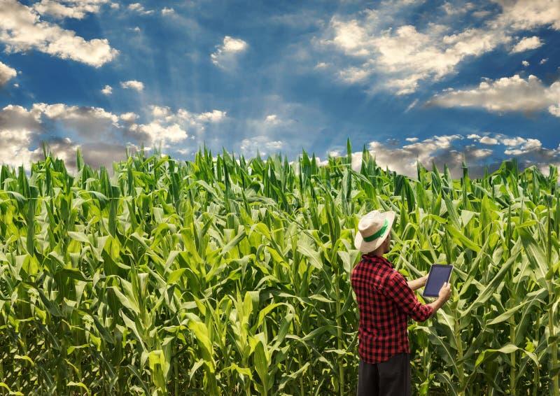 Landbouwer die digitale tabletcomputer op gecultiveerd graangebied met behulp van stock foto