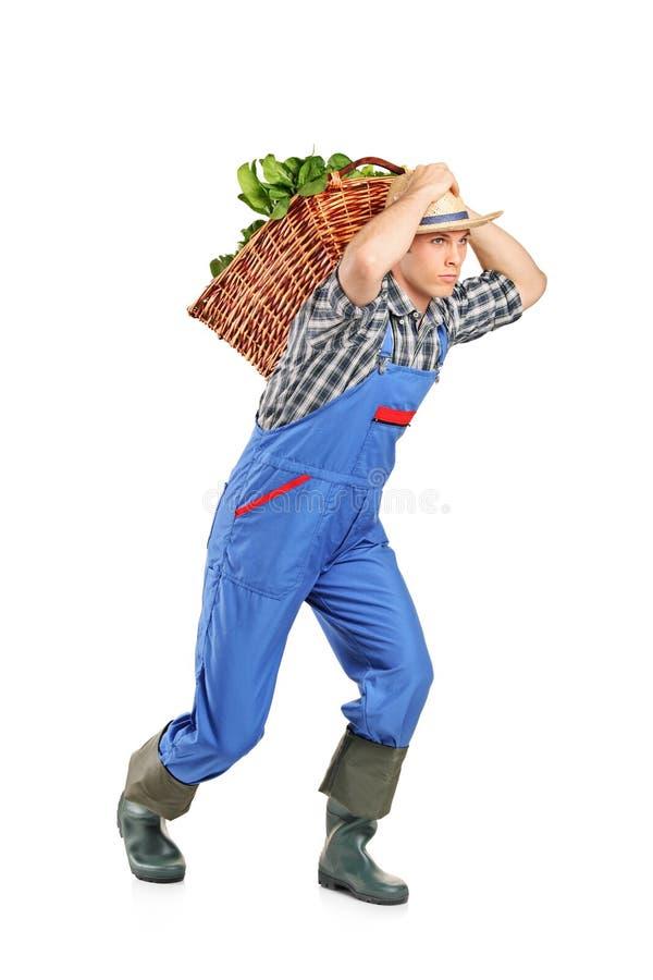 Landbouwer die een mandhoogtepunt met groenten draagt stock afbeeldingen