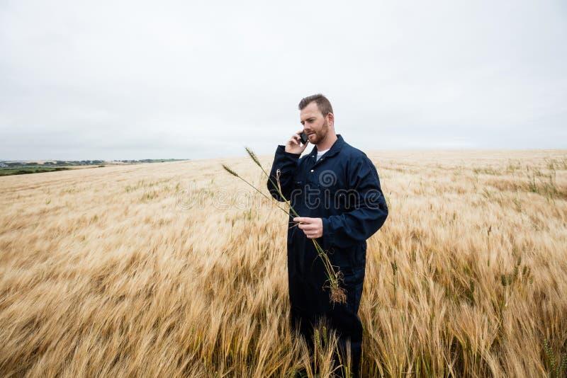 Landbouwer die gewassen onderzoeken terwijl het spreken op mobiele telefoon op het gebied royalty-vrije stock afbeeldingen