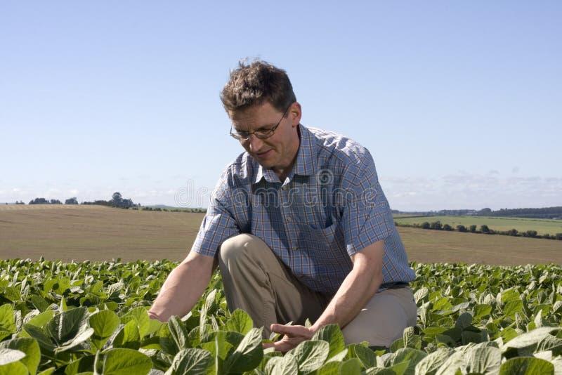 Landbouwer die het gewas onderzoekt royalty-vrije stock fotografie