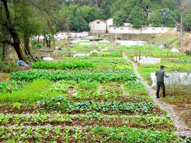 Landbouwer die het landbouwbedrijfwerk op het gebied doen royalty-vrije stock afbeeldingen