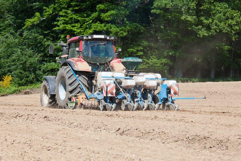 Landbouwer die het maïsgewas in de lente planten stock foto