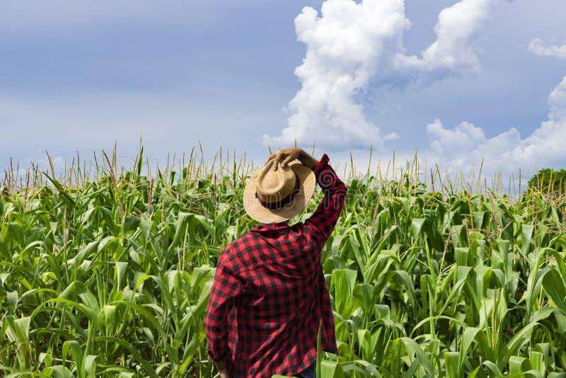 Landbouwer die met hoed het gebied van de graanaanplanting kijken royalty-vrije stock foto's