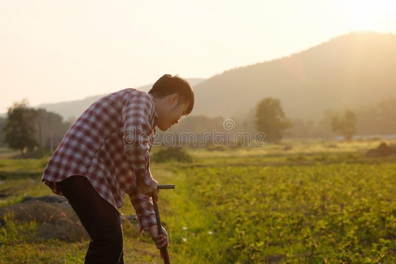 Landbouwer die op een landbouwgebied werken met uitstekende en warme toon royalty-vrije stock foto