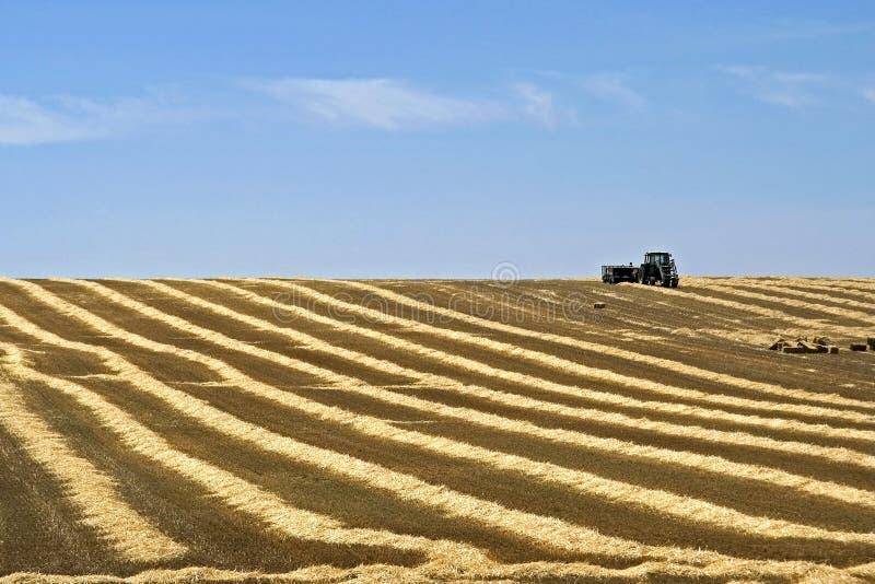 Landbouwer die strobalen op geoogst gebied vervoeren royalty-vrije stock afbeeldingen