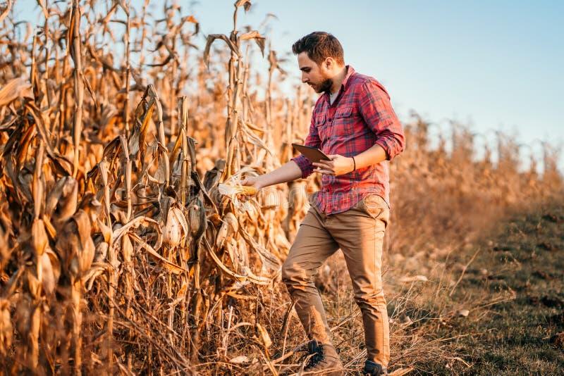 landbouwer die technologie op landbouwgebied gebruiken Het oogsten details met knappe landbouwer royalty-vrije stock foto's