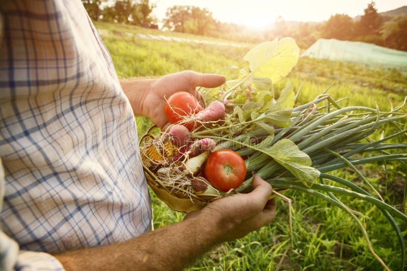 Landbouwer die verse geplukte groenten houden stock afbeelding