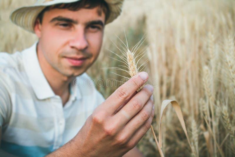 Landbouwer die wanneer het houden van het oor van tarwe in zijn hand glimlachen stock afbeeldingen