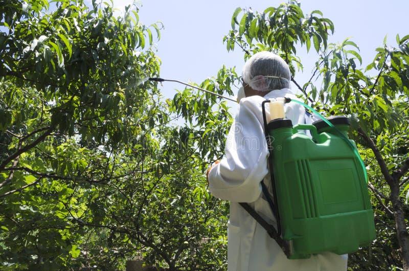 Landbouwer die witte beschermende workwear en bespuitende pesticiden op de perzikbomen in de tuin dragen stock afbeelding