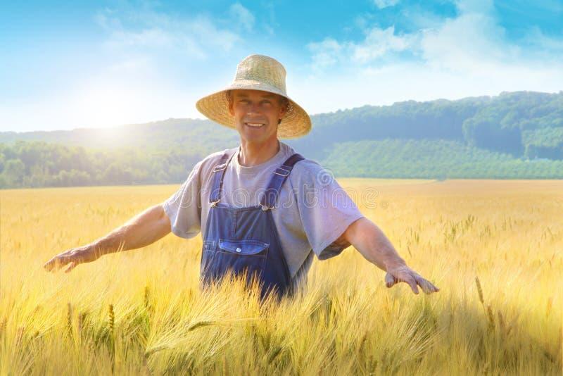 Landbouwer die zijn gewas van tarwe controleert