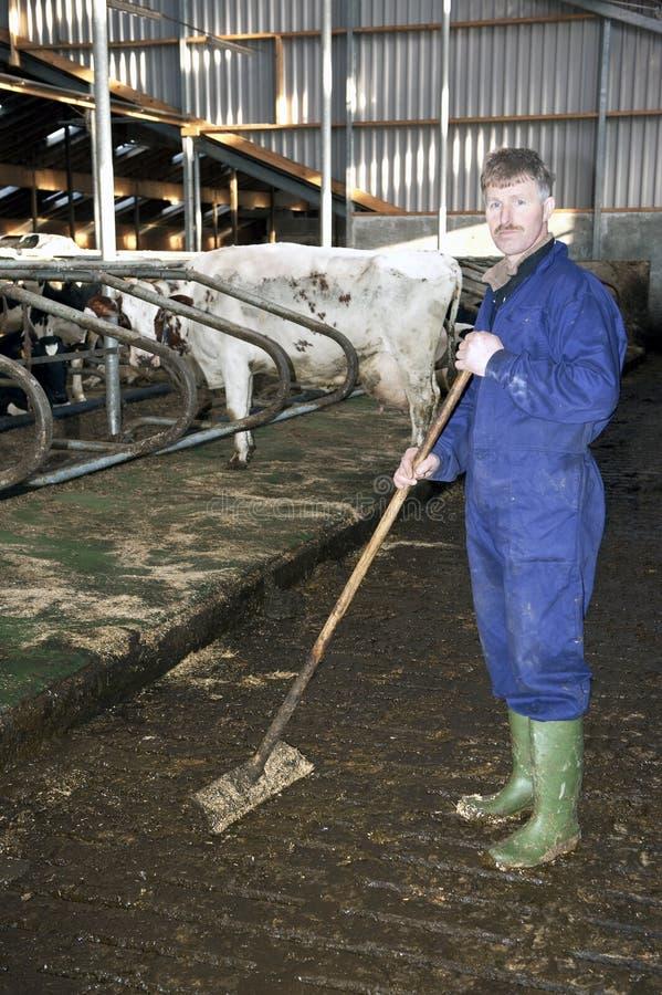 Landbouwer in een stal royalty-vrije stock afbeelding