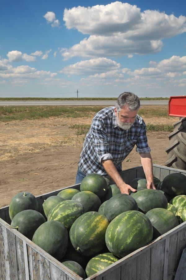 Landbouwer en watermeloenfruit bij aanhangwagen stock foto's