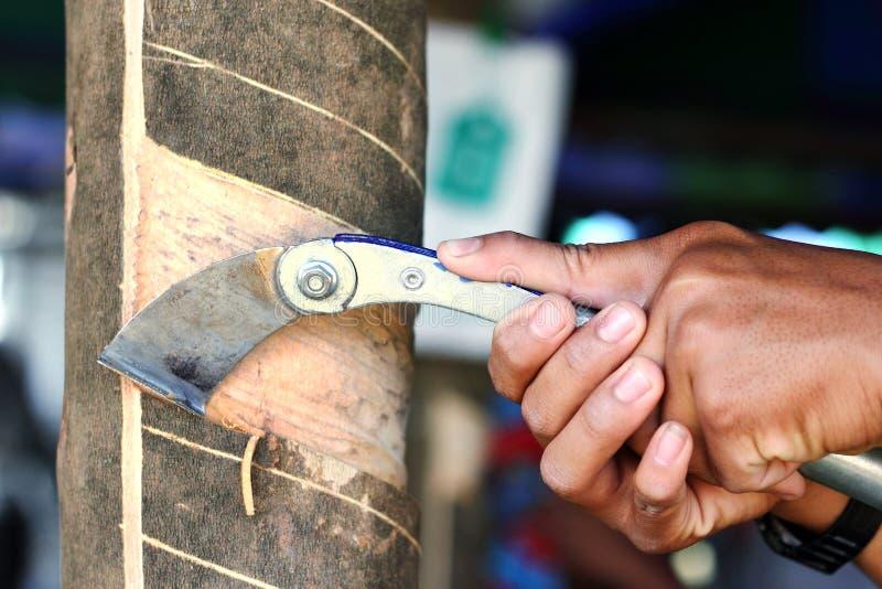 landbouwer het rubber onttrekken royalty-vrije stock afbeelding