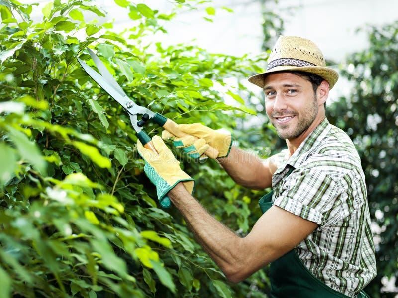 Landbouwer het snoeien installaties in een serre royalty-vrije stock fotografie