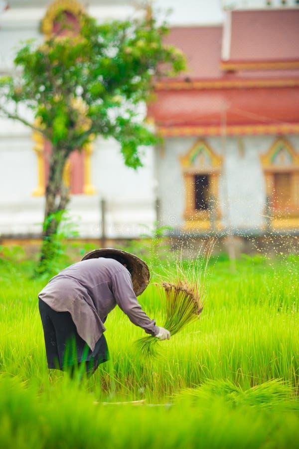 Landbouwer het werken royalty-vrije stock foto