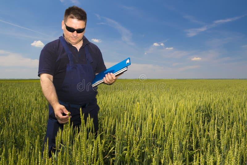 Landbouwer Inspecting Wheat stock afbeeldingen