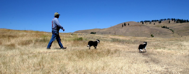 Landbouwer John. royalty-vrije stock afbeelding
