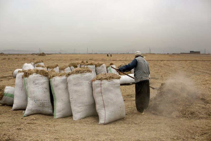 Landbouwer in landbouwbedrijf royalty-vrije stock fotografie