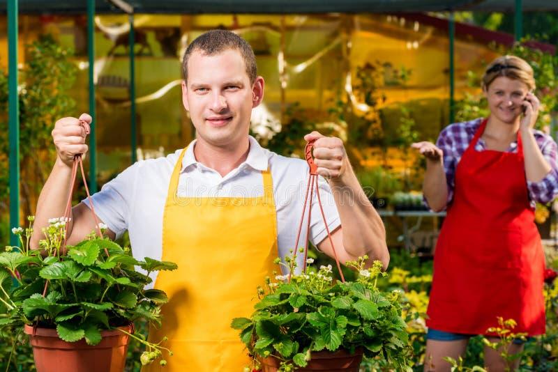 Landbouwer met een aardbeigewas in een serre royalty-vrije stock fotografie