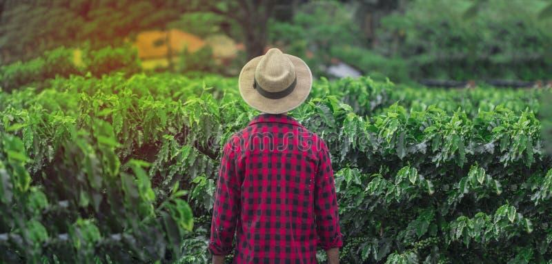 Landbouwer met hoed die zich op een gebied van de koffieaanplanting bevinden royalty-vrije stock foto