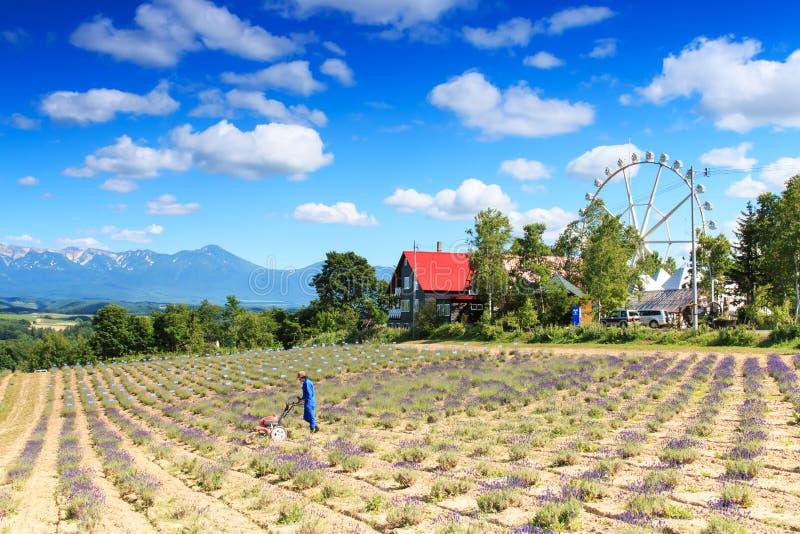 Landbouwer op een lavendelgebied in Furano en panoramisch wiel die aan achtergrond werken stock afbeeldingen