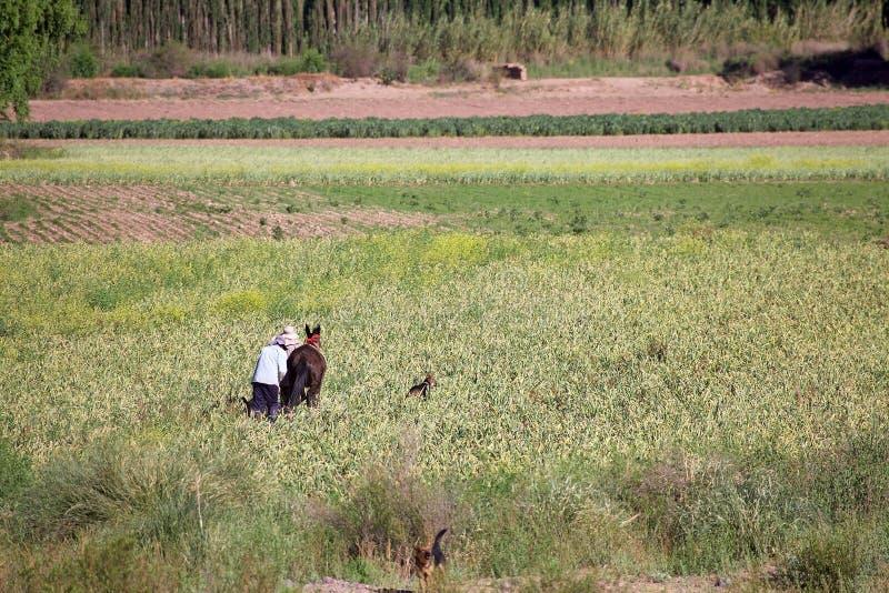 Landbouwer op het gebied dichtbij Uquia in Jujuy-Provincie, Argentinië royalty-vrije stock foto's