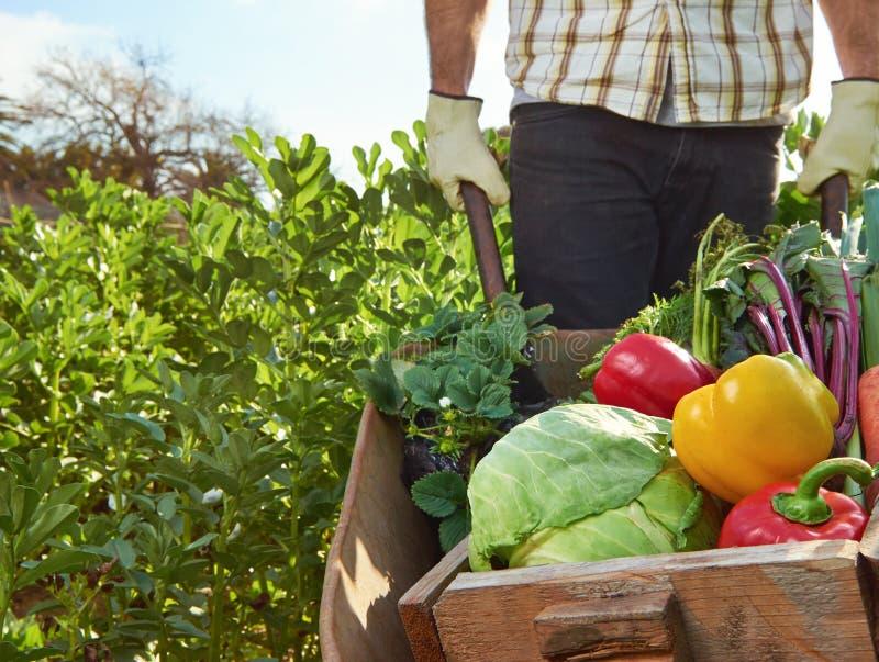 Landbouwer op lokaal duurzaam organisch landbouwbedrijf royalty-vrije stock afbeelding