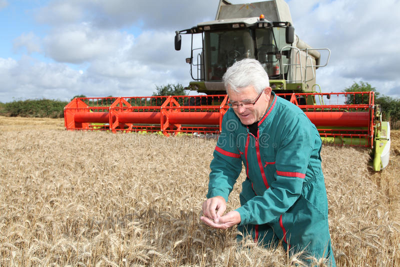 Landbouwer op tarwegebied stock foto's