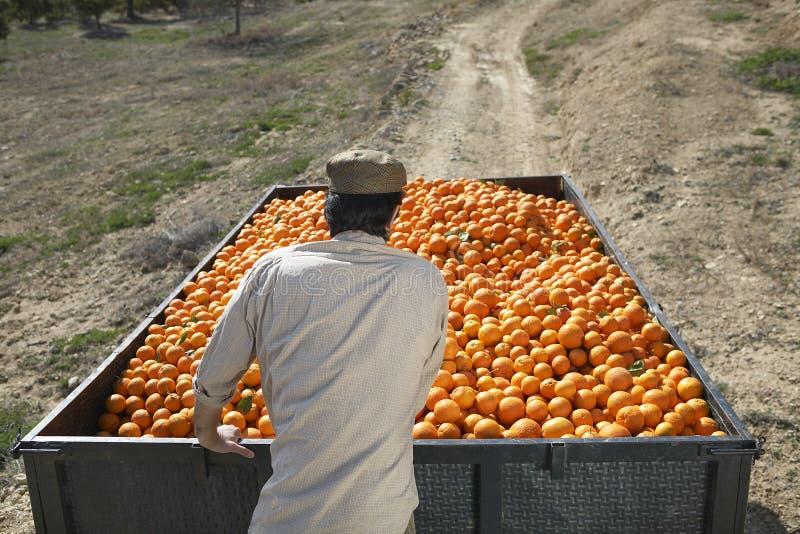 Landbouwer Pushing Oranges Trailer op Gebied royalty-vrije stock fotografie