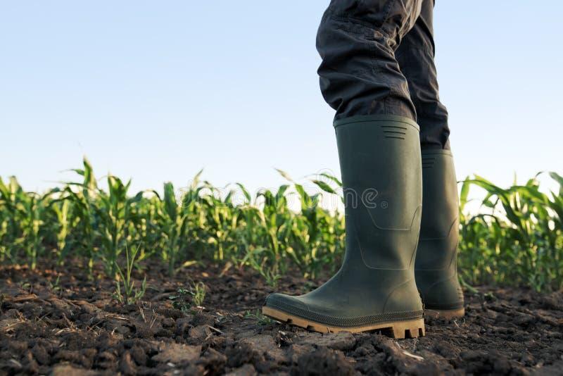 Landbouwer in rubberlaarzen die zich op graangebied bevinden stock foto