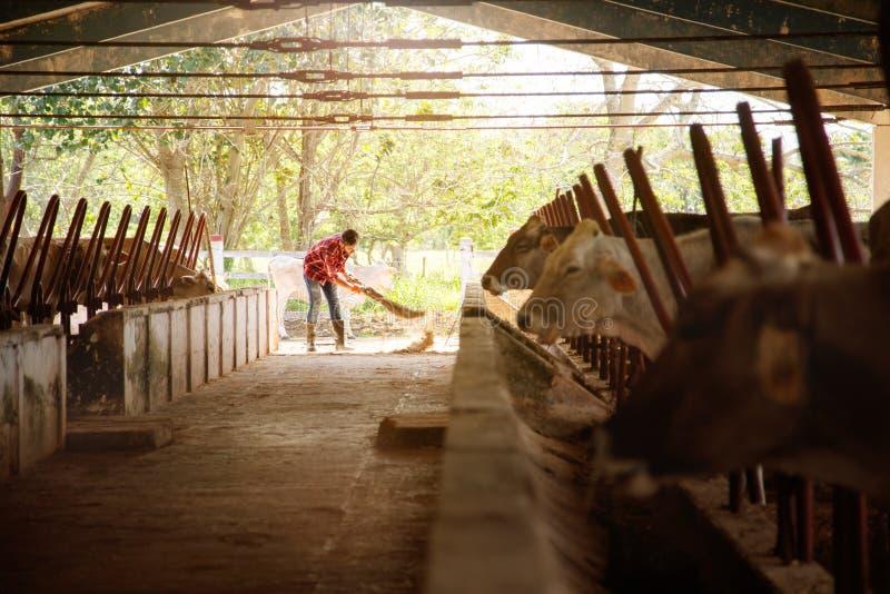 Landbouwer Sweeping Stables People van het mensen de Schoonmakende Landbouwbedrijf in Boerderij stock foto's