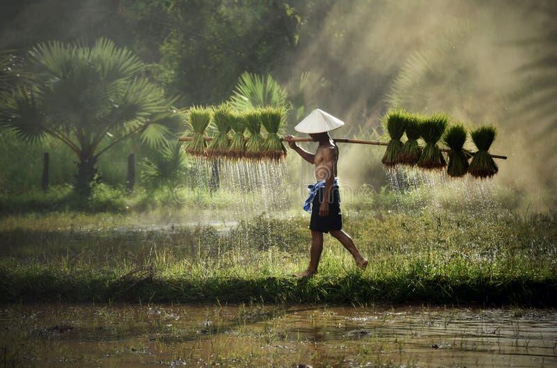 Landbouwer Thailand royalty-vrije stock afbeelding