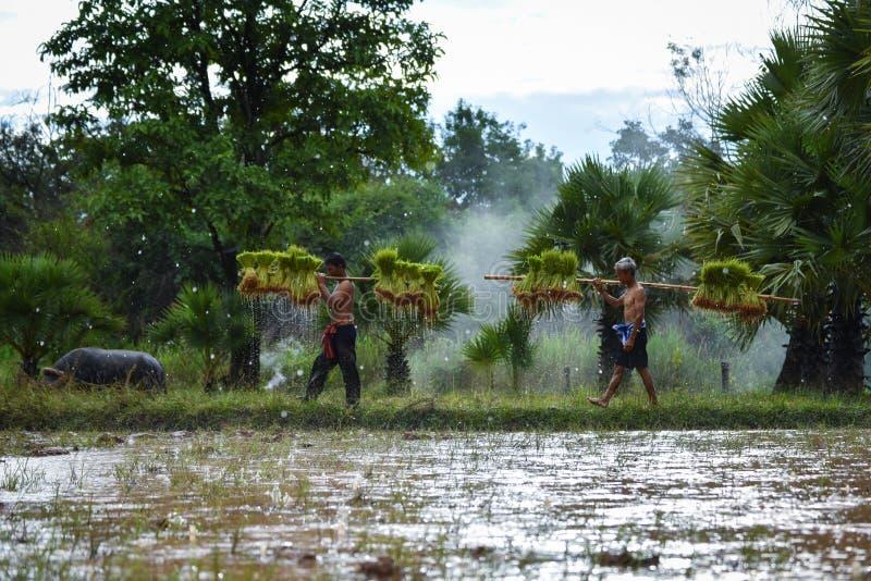 Landbouwer Thailand royalty-vrije stock afbeeldingen