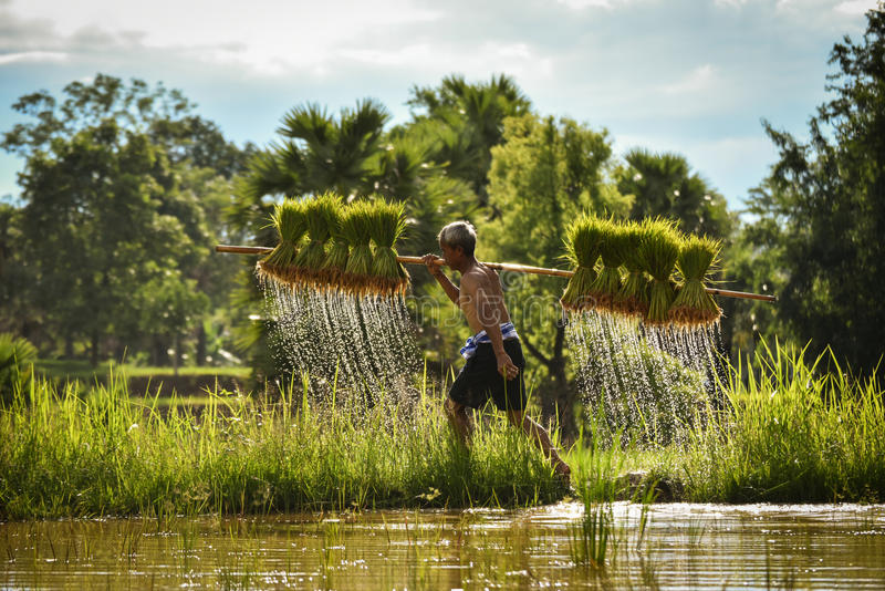 Landbouwer Thailand royalty-vrije stock foto