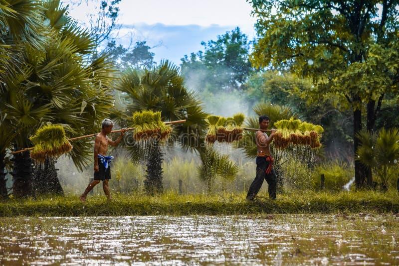 Landbouwer Thailand stock foto's