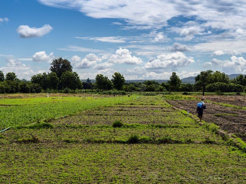 Landbouwer in Thailand royalty-vrije stock foto