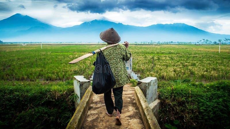 Landbouwer x Vissersgang aan horizon stock fotografie