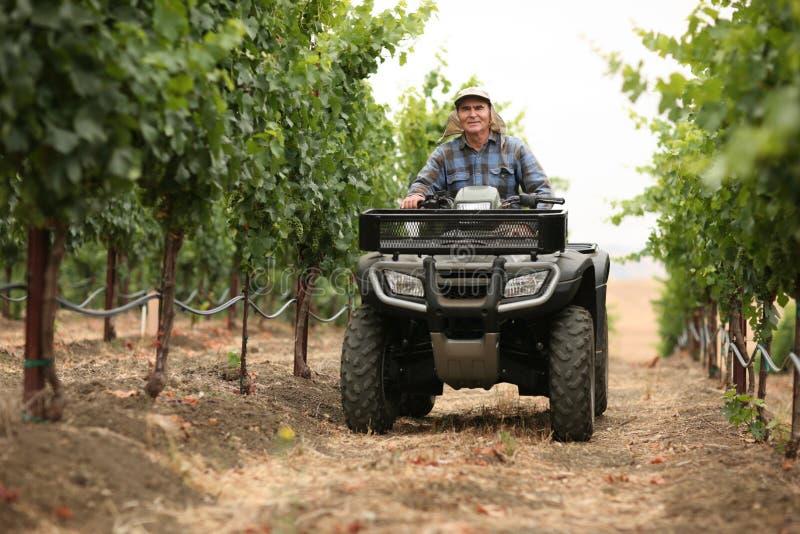 Landbouwer in wijngaard stock foto's