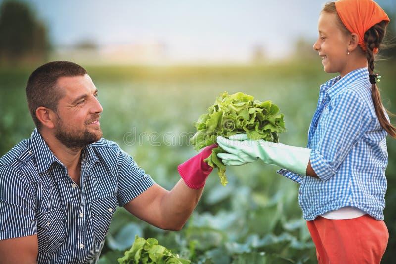 landbouwers royalty-vrije stock afbeelding