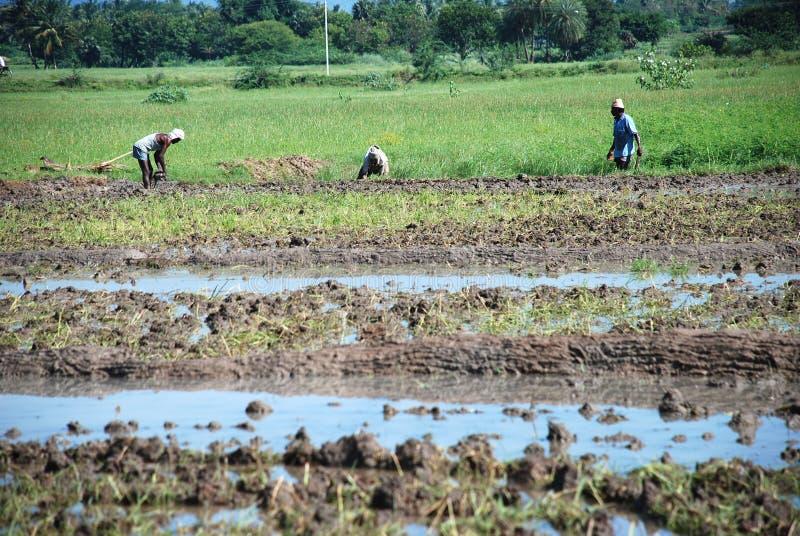 Landbouwers stock afbeeldingen
