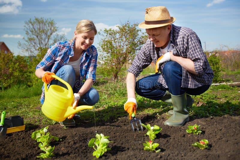 Landbouwers in de tuin stock afbeeldingen