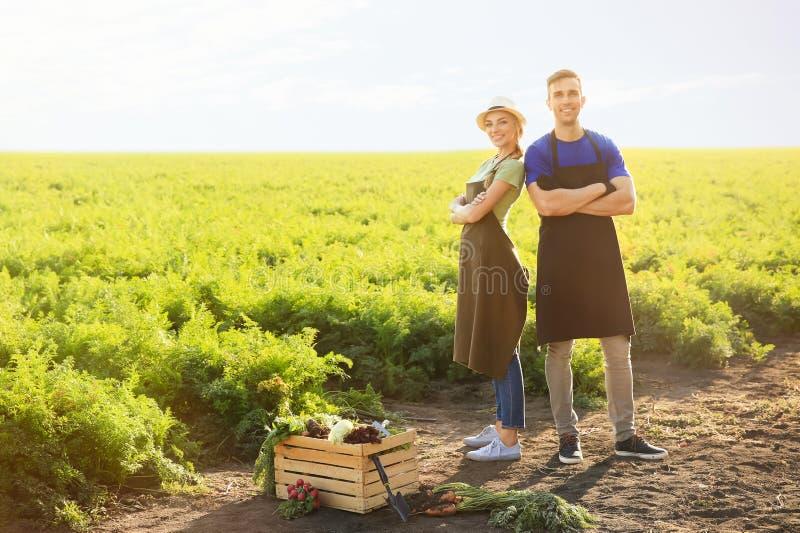 Landbouwers dichtbij krat met verzamelde groenten op gebied royalty-vrije stock fotografie