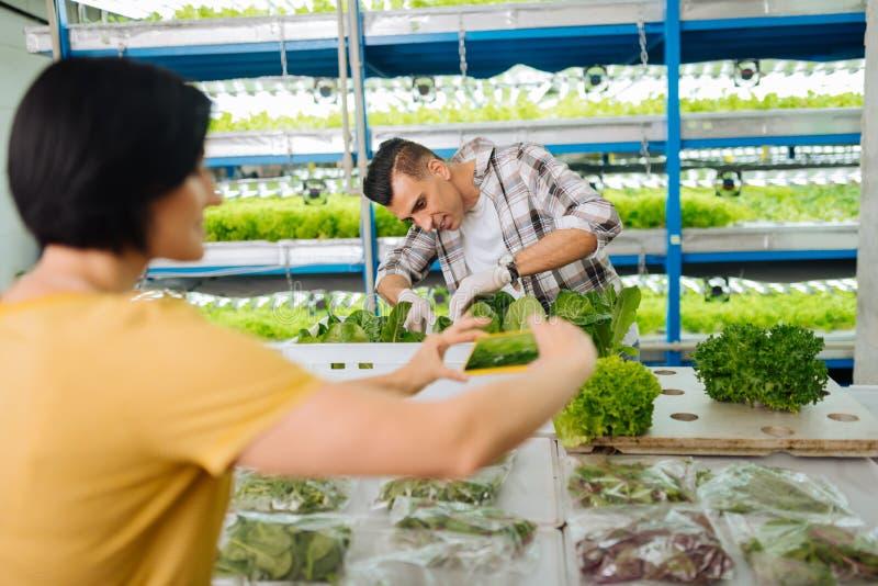 Landbouwers die beeld van sla na het verzamelen van het in serre nemen stock afbeelding