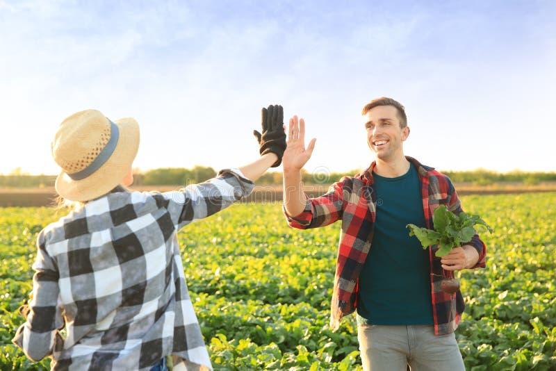 Landbouwers die elkaar hoog-vijf op gebied geven royalty-vrije stock afbeelding